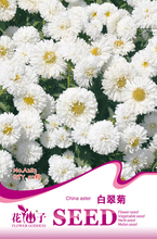 1 original pack 50 pcs white China aster seeds, Garden bonsai Flower seeds, Easy Grow Callistephus free shipping