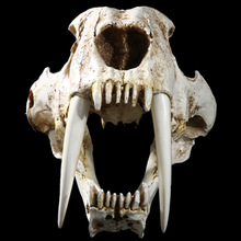 1:1 Saber-Toothed Tiger Resin Skull Replica Head Model Home Bar Decor Halloween Decor