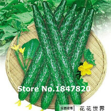 Wholesale 100pcs long fruit cucumber seeds , Green vegetable Seeds, flower plants bonsai,free shipping