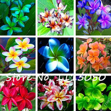 New 50Pcs Plumeria Hawaiian Foam Frangipani Flower For Wedding Party Decoration Romance Exotic Flower Seeds Egg Flower Seeds