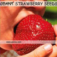 Strawberry Seeds,super Giant Strawberry Fruit Seed Apple Sized 100% True Variety NOT Fake,50 Pcs/bag(China)