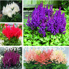 100pcs Dinner Plate Rainbow Astilbe Chinensis Seeds Chinese Peony Bonsai Flower Seed Various Colors To Choose For Home Garden