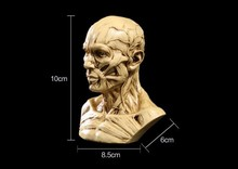 Resin Skull Muscle skull model Medical simulation mannequin bust free shipping
