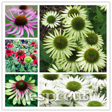 NEW Variety 100 seeds/bag Echinacea purpurea straw hat Rare Flower Seeds for home & garden Very Easy plant Daisy Flores plants.