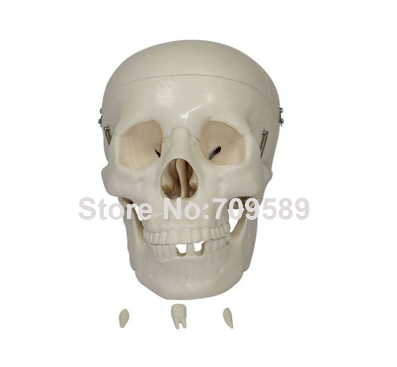 HOT SALES life-size skull<br>