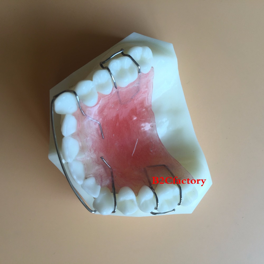 Dental  Hawley Retainer Model Teeth Study Teach Model 3007 01<br>