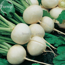 White Egg Snowball Turnip, 100 seeds, organic Chinese vegetables E3923