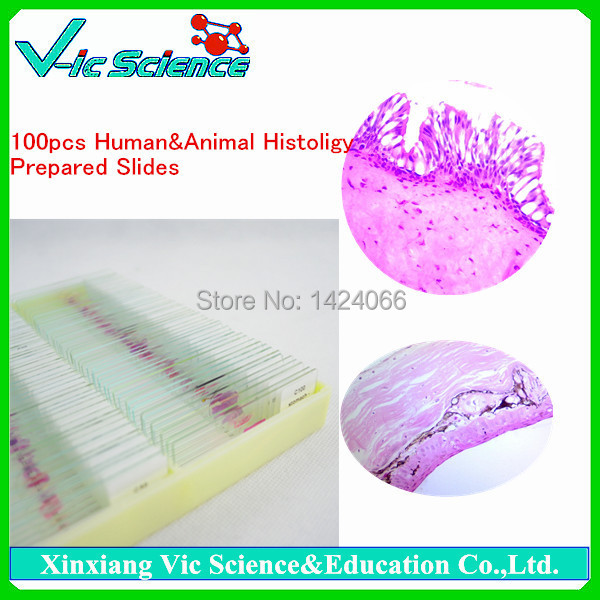 100pcs Human&amp;Animal Biology Histology Prepared Slides set<br>