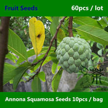 Very Reliable Annona Squamosa Seeds 60pcs, Prompt Shipment Custard Apple Tree Seeds, Chinese Sweetsop Sugar-apple Fruit Seeds(China)