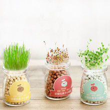 Hydroponic potted creative office DIY negative ion small bonsai desktop cute grass micro landscape heart shaped plants