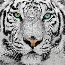 5D DIY Full White Tiger Head Diamond Painting Cross Stitch Picture Diamond Embroidery Mosaic Pictures Diamond Peinture Diamant