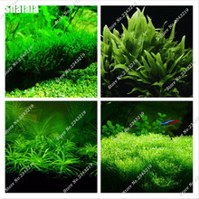 200pcs Aquarium Plant Seeds Water Aquatic Plant Ornamental Grass Seeds Fish Tank Aquatic Plant Seeds Home & Garden Gifts Plants(China)
