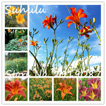 Rare 100 seeds/bag Hybrid Daylily Flowers Seeds Hemerocallis Lily Indoor Home Garden Planting Easy To Grow