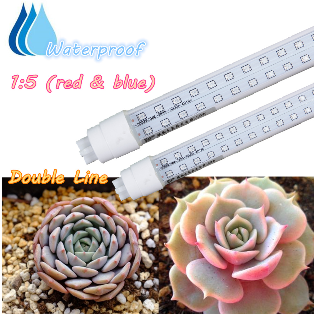 1:5 Red And Blue Succulent Professional Led Grow Light Double Line 30cm  Indoor Plant Lamp Pack Of 2 Waterproof In LED Grow Lights From Lights U0026  Lighting On ...