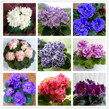 100 pcs/bag african violet seeds, bonsai flower seeds, garden flowers violet seeds perennial herb plant pot for home garden