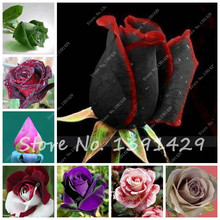 Recommend Seeds Rare Rose Flower Seedling Seed Outdoor Decor rosas Seed The Best Gift For The Wife 50 Pcs(China)