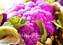Фиолетовая цветная капуста выращивание 6