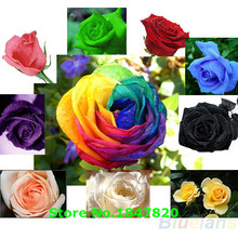 AAA 100pc/lot Rose Seeds Blue Red Purple Pink Black Rainbow Petal Plants Home Garden Flowers Bonsai