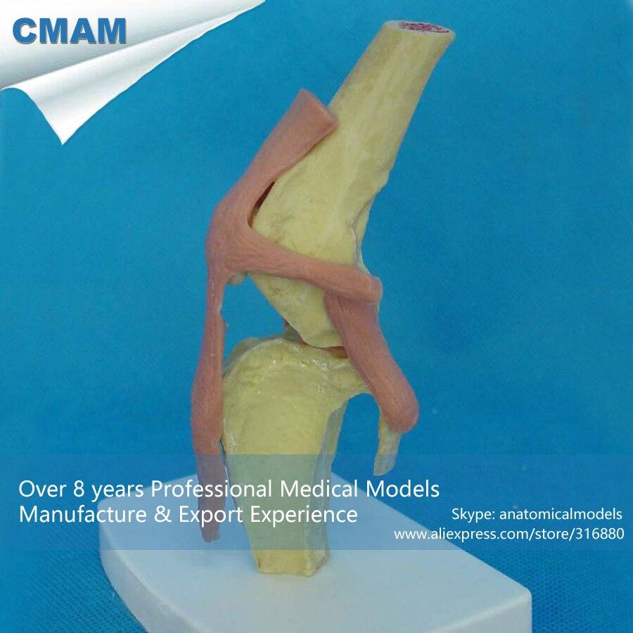 CMAM-A18 Anatomical Canine / Dog Knee Joint Model - Medical Animal Skeleton Anatomy Models<br><br>Aliexpress