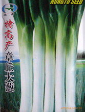 Special high-yielding vegetable seeds SEEDS Zhangqiudacong 100seed(China)