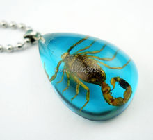 FREE SHIPPING 12 PCS Gold Scorpion Blue Colorful Lucite 70 CM Stainless Steel Ball Bead Necklace Pendant Jewel Novel Gift(China)