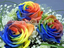 50pcs/pack 24 Varieties Rare Holland Rainbow Rose Flower Seed Rose seeds Free Shipping(China)