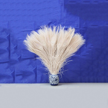 10pcs Wholesale beautiful white peacock tail feathers 10-12 inches Wedding, Party ,Home ,Hairs Decoration FREE SHIPPING