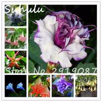 Sale-100Seeds-bag-Datura-Seeds-Brugmansia-Angel-Trumpets-Bonsai-Tree-Beautiful-Flower-Seeds-Easy-To-Grow.jpg_200x200