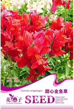 Sweetheart snapdragon flowers, hot potted seeds easy to grow new 60 A181(China)