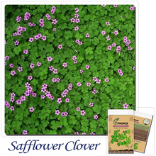 Sub-species of perennial forage grass seeds potted flowers safflower clover 100