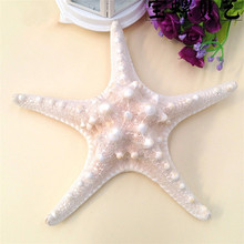 5pcs / lots Natural crafts white bread sea shell starfish, fashion home decorative handicrafts free shipping