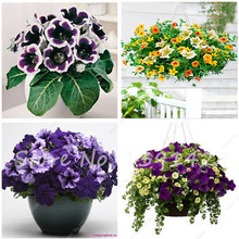 Free shipping 50 pcs Morning Glory flower seeds Climbing Petunia Seeds, Perennial Flower Seeds Bonsai Room Flower Plant for sale