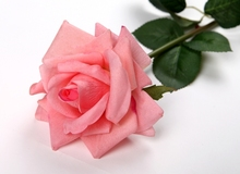 11cm Real Touch Rose artificial flowers, Home Wedding Party Christmas Decoration Latex rose, floral arrangement 24pcs