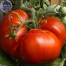 Super Rare Red Giant Competition Tomato Seeds, 100 Seeds, Professional Pack, Big Zac heirloom tomato E4078
