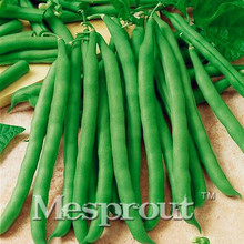 Green Loosened Bean Seed Vegetable Seed,(20PCS Seeds),Bonsai Seed, fruit and vegetable planting,High budding rate