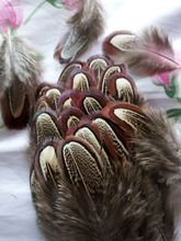 Wholesale perfect  10pcs  high quality natural  Pheasant feathers 2-3inch/4-8cm  Decorative diy