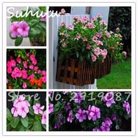 40pcs-bag-Vinca-Periwinkle-Catharanthus-roseus-seeds-rare-Indoor-beautiful-periwinkle-Flower-Seeds-easy-to-grow.jpg_200x200