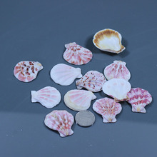 5pcs/lot Conch shell baby natural seven multicolour diy fan punch color shell fish tank decoration yangtz(China)