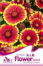 A variety of chrysanthemum seed powder knapweed flowering potted flower seeds Can the sowing Pleasant aroma 50 grain