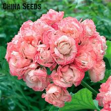 Garden Geranium Seeds Rare And Beautiful Pot Flower Plants Pelargonium Flowers For Garden Decoration Bonsai Seed 100pcs Semillas