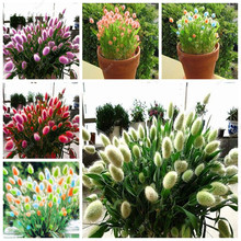Beautiful 100 Pcs Ornamental Rabbit Tail Grass Seeds a Variety Of Color Mixing Of Grass Diy Potted Plant For Garden Ornamental(China)
