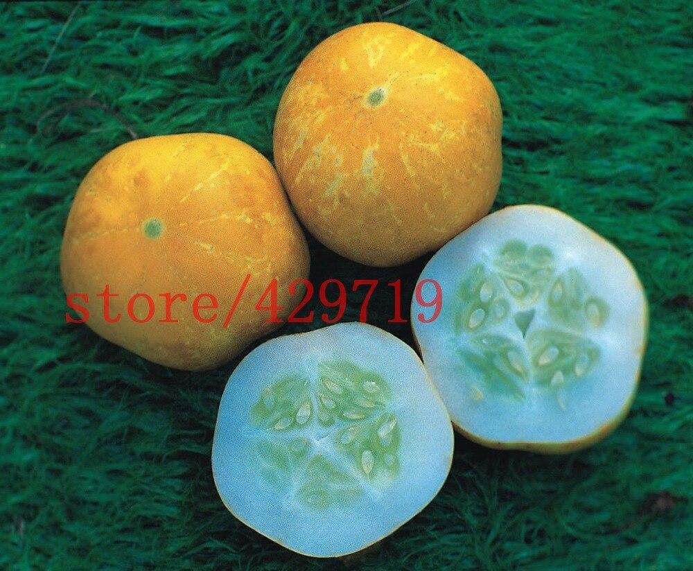 Цитрон огурец выращивание 8
