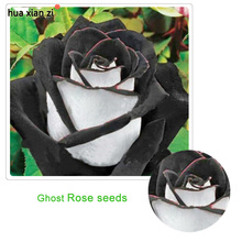 Rare White Black Edge Rose Seeds Plants Potted Rose Flower Seeds Balcony for Home Garden 100 pcs / lot