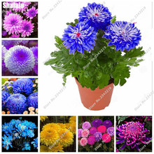 Hot Sale! 30 Pcs Chrysanthemum Seeds Tea Flower Seeds Can Scattered Wind Heat, Pinggan Eyesight, Detoxification. Variety Complet(China)