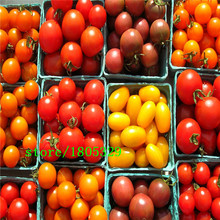 GGG 100 Pcs ITALIAN TREE TOMATO Seeds 'Trip L Crop' Seeds *Comb S/H Free shipping(China)