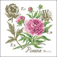 Free Delivery Top Quality Botanical Counted Cross Stitch Kit Pivoine Peony Flower botanique cross stitch DFEA