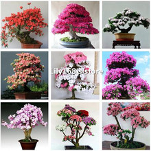 100 pcs/pack Rare Bonsai 13 Varieties Azalea Seeds DIY Home& Garden Plants Looks Like Sakura Japanese Cherry Blooms Flower Seeds(China)