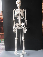 "85cm life size 33.5 "" Human skeleton anatomical model Anatomical Anatomy Skull Sculpture Head body model Muscle Bone Artist"