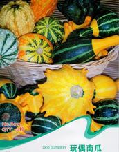 Doll Pumpkin Seeds Mix Ornamental Cucurbita Vegetable Plants B012(China)