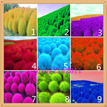 200 pcs/bag kochia,kochia scoparia,burning bush kochia scoparia,grass seeds,flower seeds,outdoor plant for home garden planting